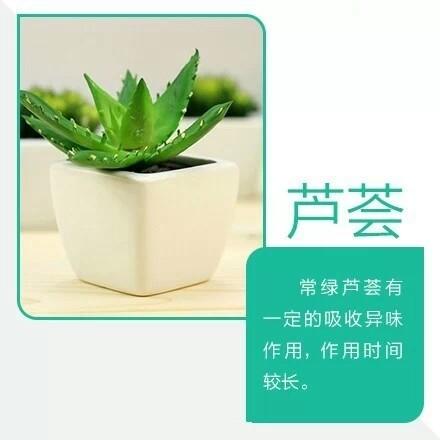 9款吸毒植物