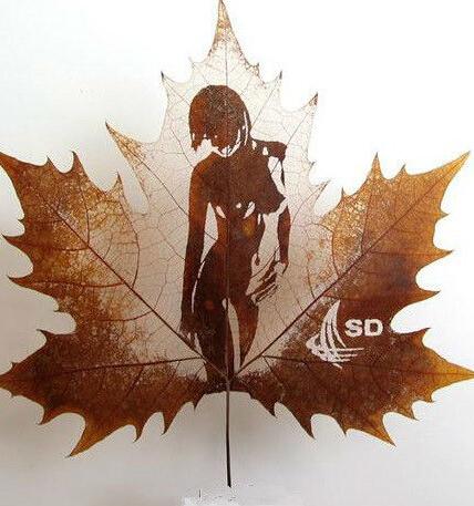 叶子上的微世界