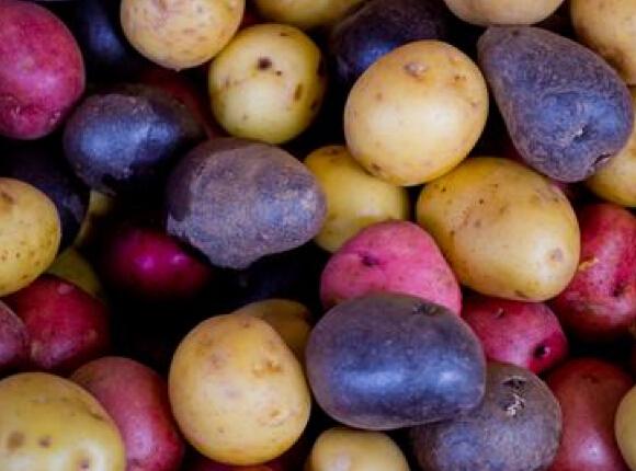 世界公认的24种顶级抗衰老食物
