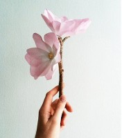 手工教程-卡纸手工制作唯美木兰花的方法图解