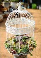 制作一个美美的鸟笼装饰仅仅一步之遥