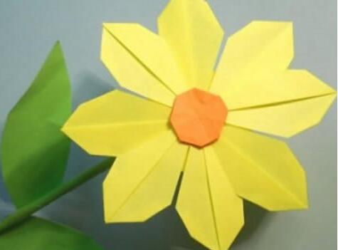阳光明媚太阳花
