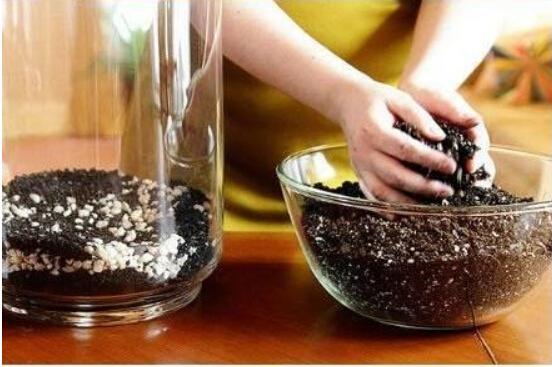 自制植物苔藓微景观玻璃花盆