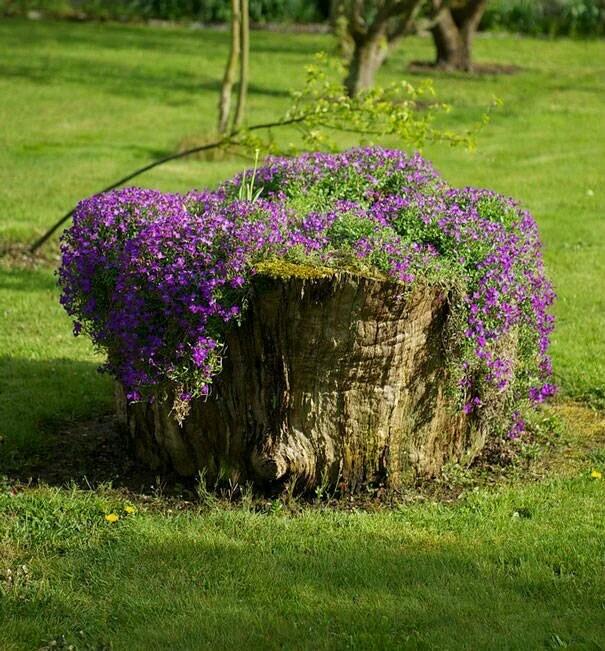 你的老家有这样不要的树桩吗?稍加利用,它就可以成为大赞的风景哦!
