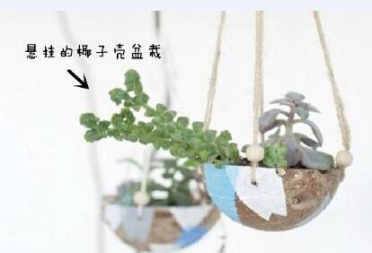 创意小盆栽