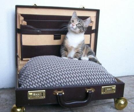 手提箱改造宠物窝